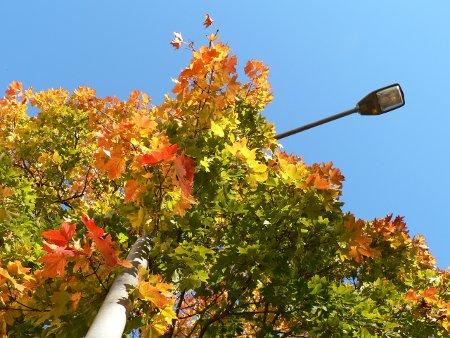 Bild på träd med höstlöv och lyktstolpe till del tre i serien: Höstlöv - en låts födelse, förvandling, död och återuppståndelse.
